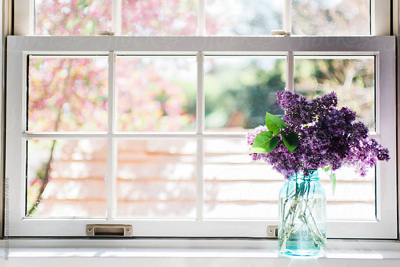 A jar of lilacs displayed in a mason jar on a windowsill. by Melissa Ross for Stocksy United