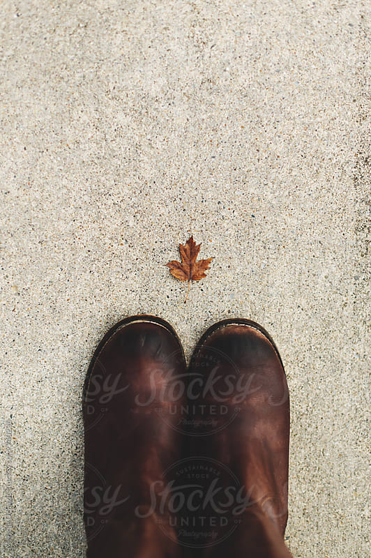 leaf by Melanie DeFazio for Stocksy United