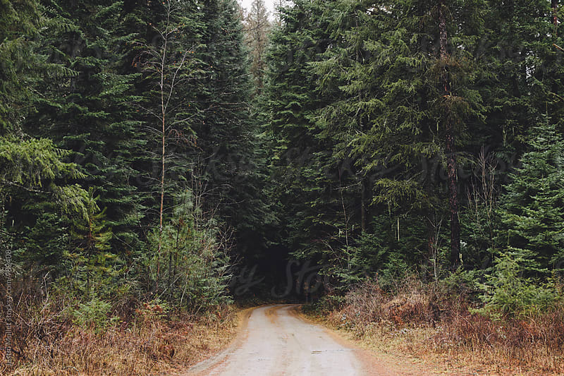 Narrow dirt road heading into the forest.  by Justin Mullet for Stocksy United