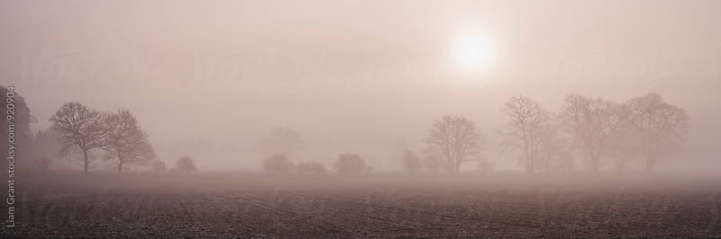 Sun rising through fog above a row of trees. Norfolk, UK. by Liam Grant for Stocksy United
