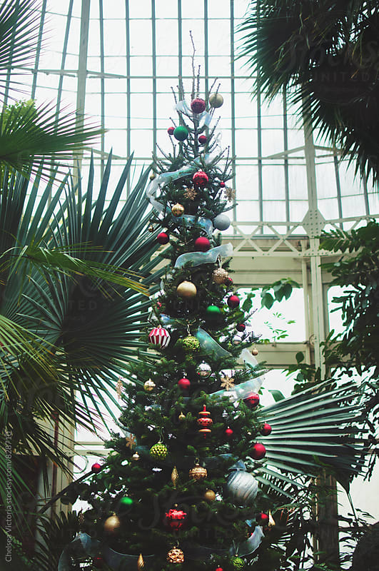 A Christmas tree in a tropical setting by Chelsea Victoria for Stocksy United