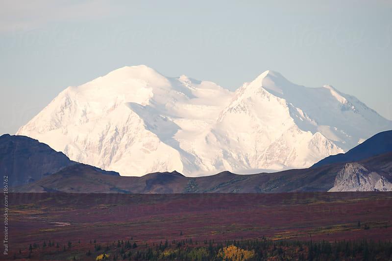Denali National Park's Mount McKinley by Paul Tessier for Stocksy United