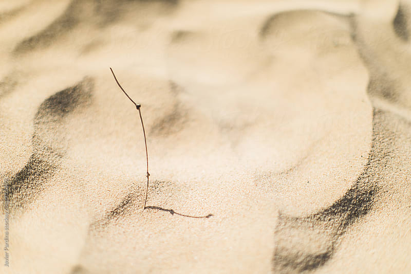 texture of sand by Javier Pardina for Stocksy United