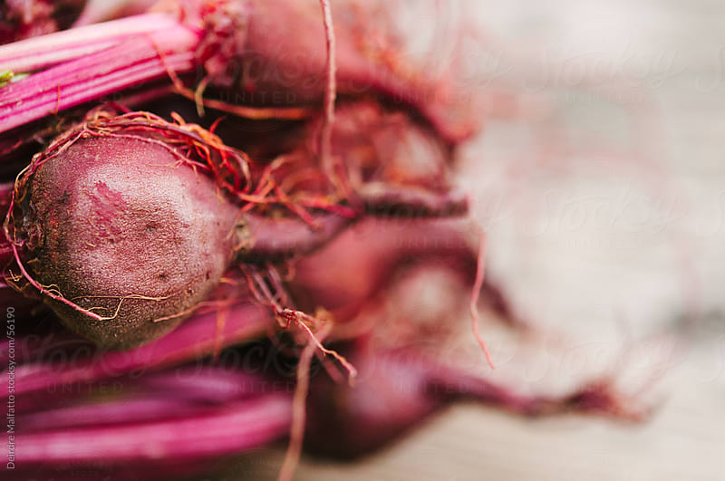 Close-up of Beet Roots by Deirdre Malfatto for Stocksy United