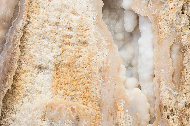 Fossilized coral macro by Mark Windom for Stocksy United