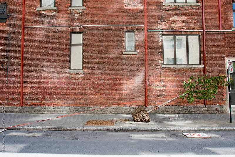 Red brick wall and an unplanted tree by Erik Naumann for Stocksy United