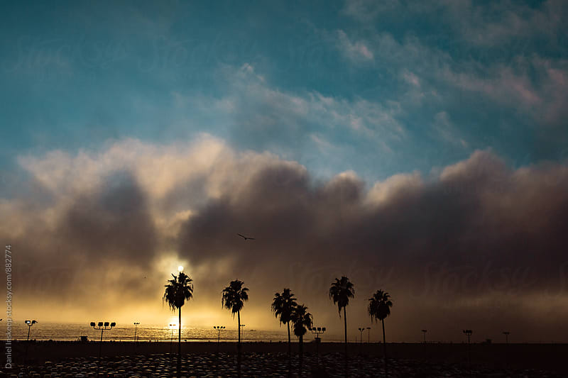 Silhouetted Palm Trees at Santa Monica Beach by Daniel Inskeep for Stocksy United