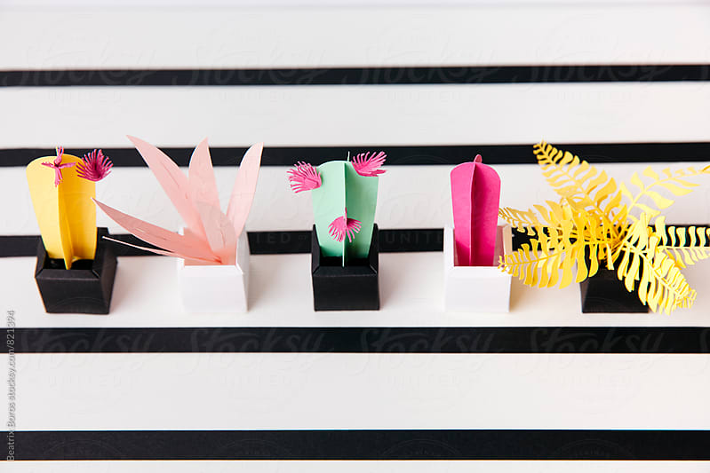 Cactuses and other plants in a row on a striped surface  by Beatrix Boros for Stocksy United