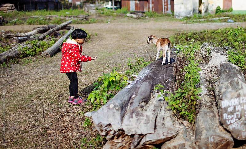 Child beckons a baby goat to come closer and play by Saptak Ganguly for Stocksy United