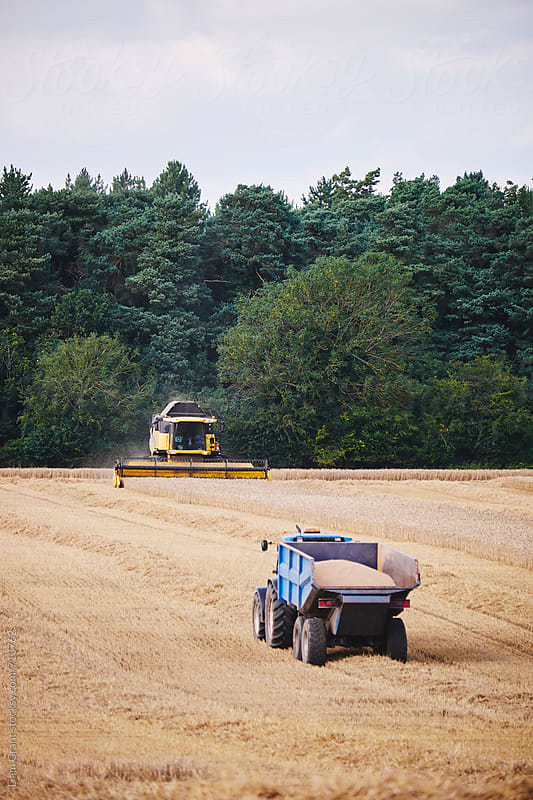 Tractor waiting to collect grain from a combine harvester. Norfolk, UK. by Liam Grant for Stocksy United
