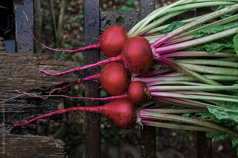 Freshly harvested beetroot by Rowena Naylor for Stocksy United