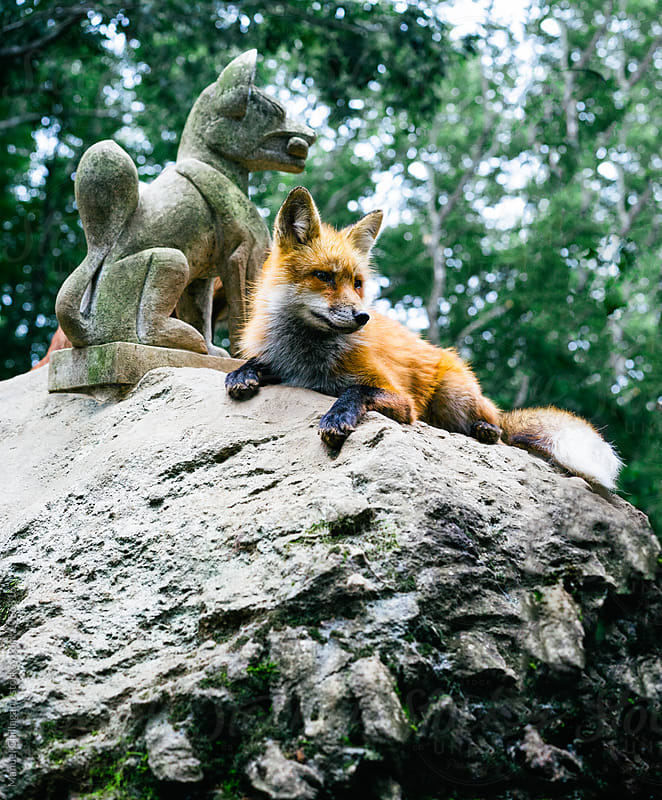 Red fox and a statue of fox deity Inari by Manuel Chillagano for Stocksy United