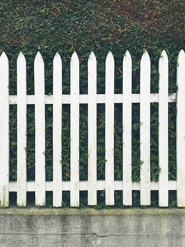 White picket fence in front of green hedge by Paul Edmondson for Stocksy United