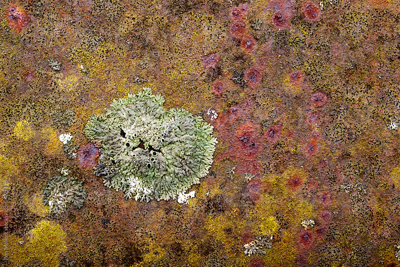 closeup macro of lichen patches on a roadside guardrail pattern texture colors  by Ron Mellott for Stocksy United