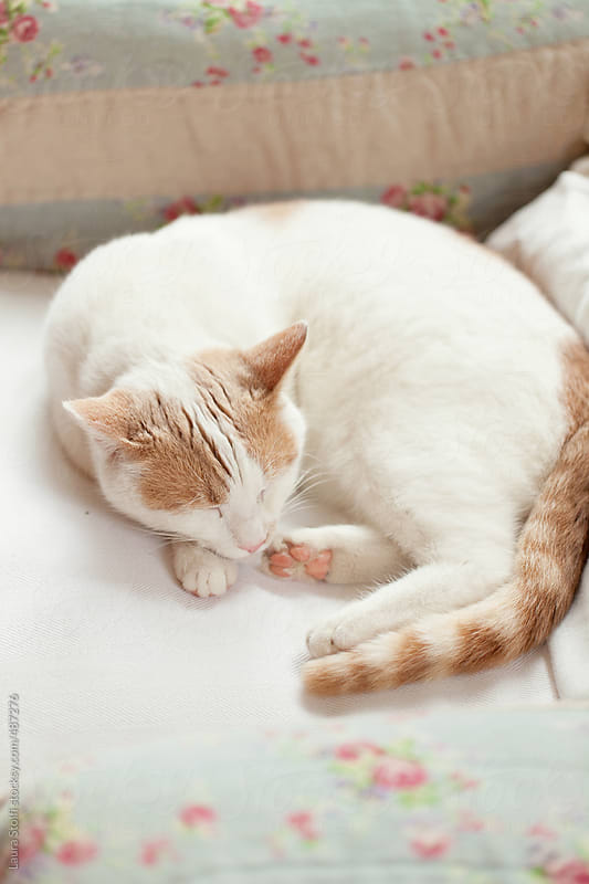 High angle view of nestled cat sleeping blissfully on armchair  by Laura Stolfi for Stocksy United