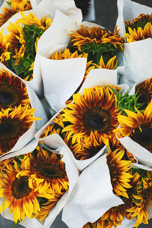 Bouquet of sunflowers.  by BONNINSTUDIO for Stocksy United