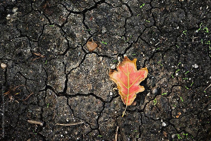 leaf on dry soil by Atakan-Erkut Uzun for Stocksy United