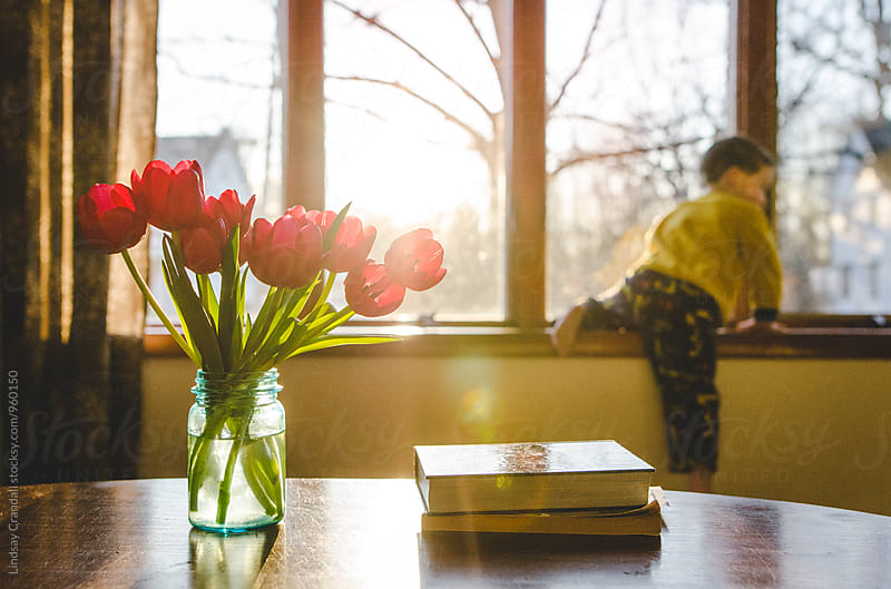 Tulips and books on a table in the sunlight with little boy sitting on windowsill in the background by Lindsay Crandall for Stocksy United