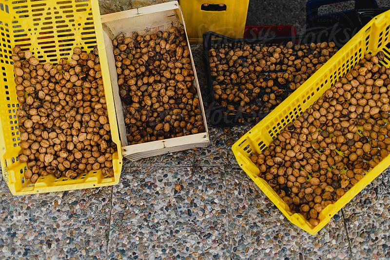 Baskets full of hazelnuts by Leandro Crespi for Stocksy United