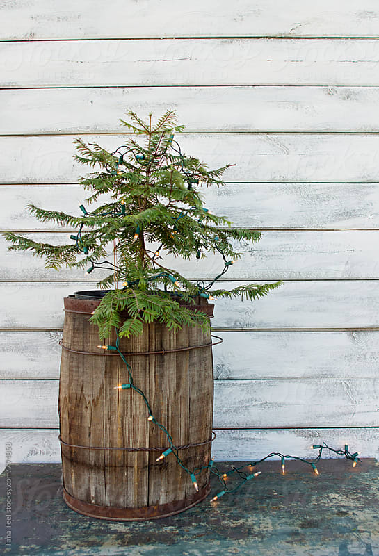small lit live evergreen tree in wood barrel against white wall by Tana Teel for Stocksy United