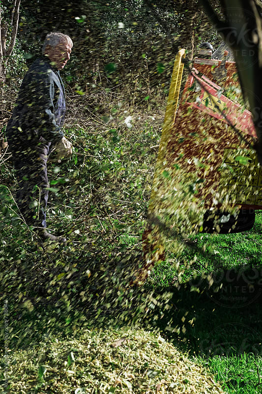 Tree leaves and branches flying from mulching machine by Rowena Naylor for Stocksy United