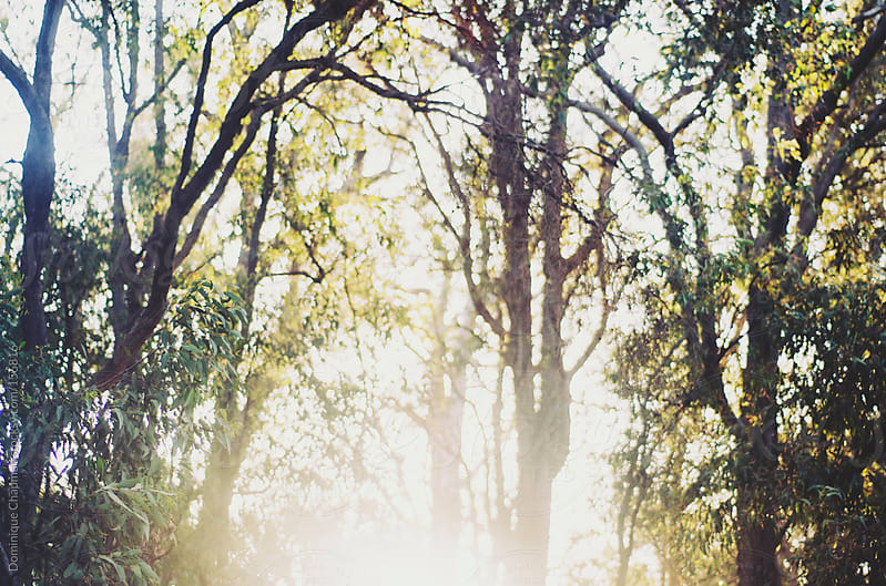 Sun hitting through trees by Dominique Chapman for Stocksy United
