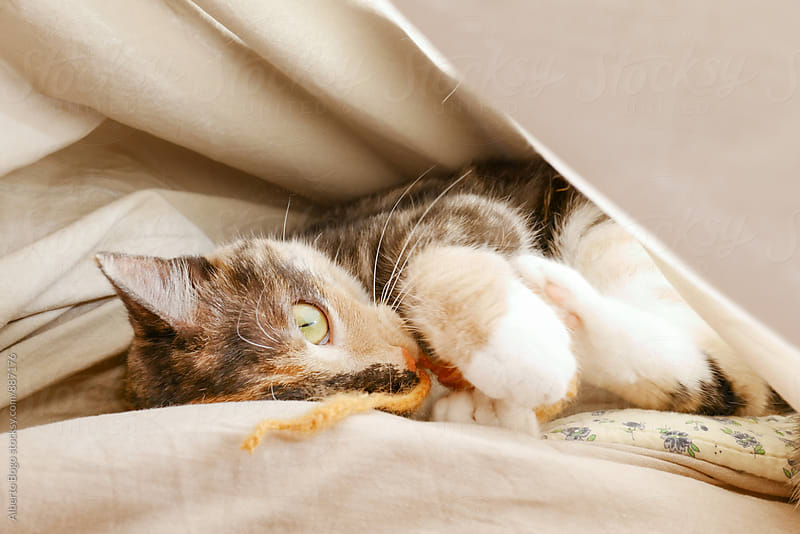 Cat lying under blanket with orange toy by Alberto Bogo for Stocksy United