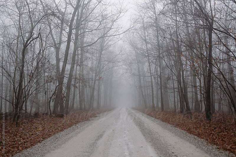 Foggy Road in Winter by Brad & Jen for Stocksy United