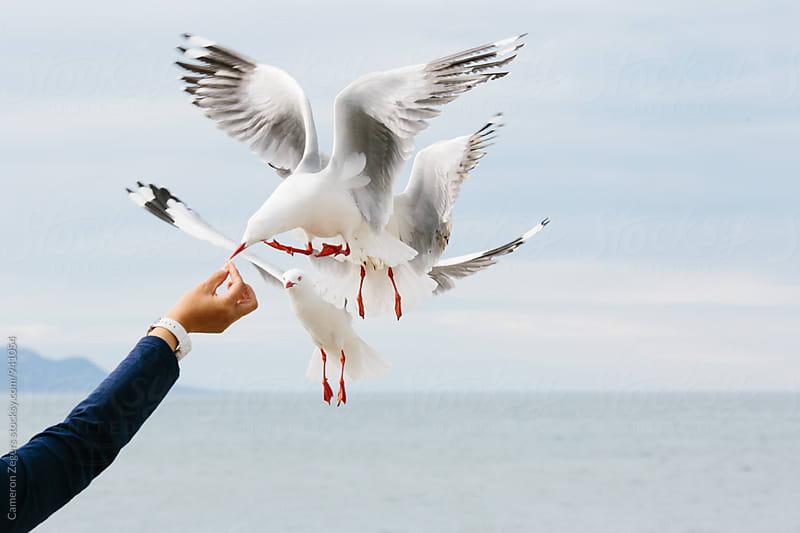 woman feeding sea gulls near ocean by Cameron Zegers for Stocksy United