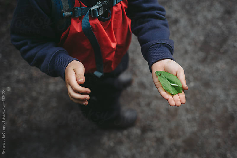 Young caucasian boy's hands holding inch worm at nature preschool by Rob and Julia Campbell for Stocksy United