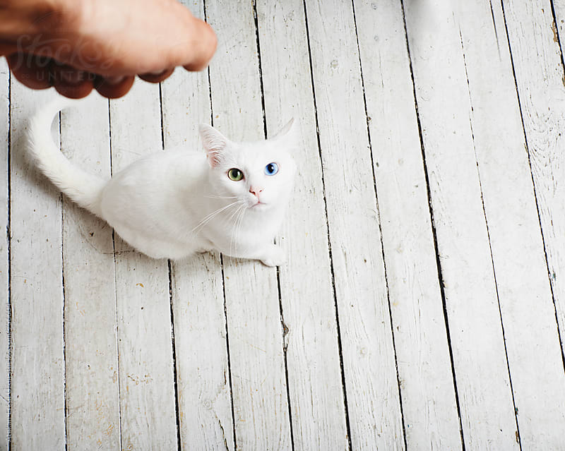feeding white cat by Atakan-Erkut Uzun for Stocksy United