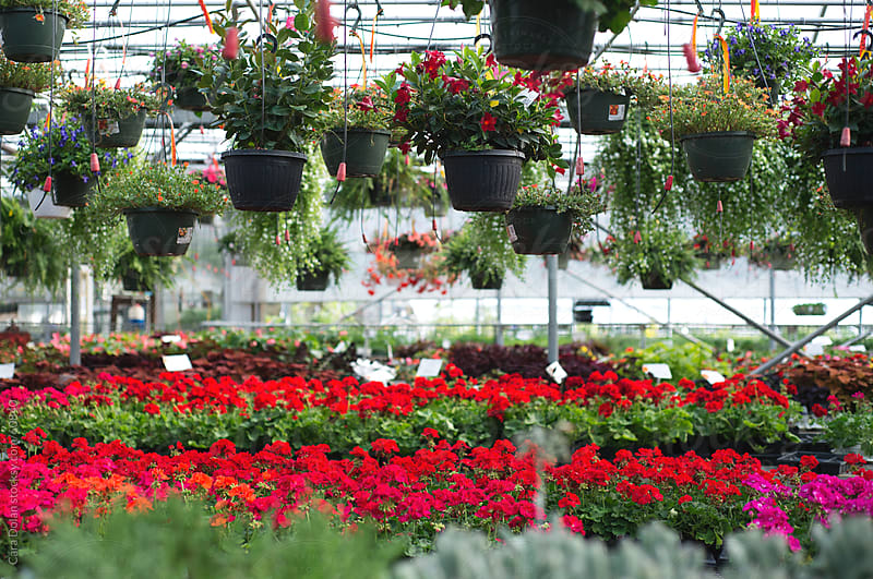 Greenhouse filled with a variety of plants for sale by Cara Slifka for Stocksy United
