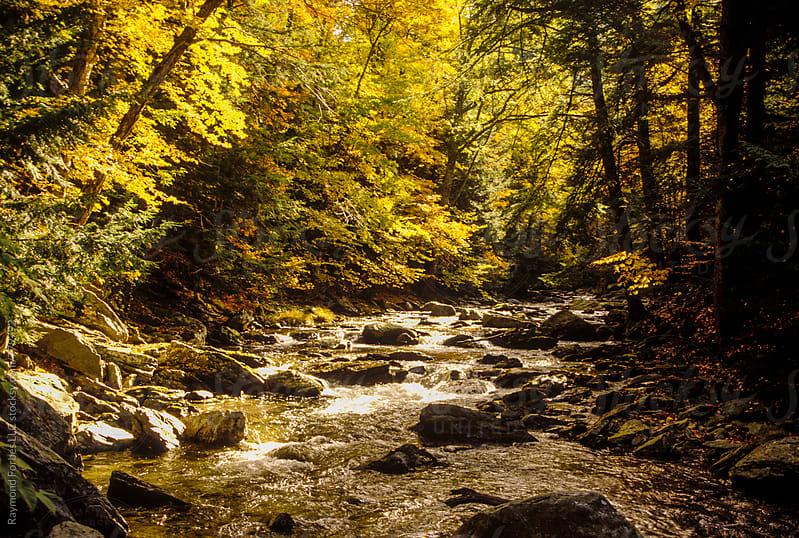 Mountain Stream in Berkshire Hills Massachusetts by Raymond Forbes LLC for Stocksy United