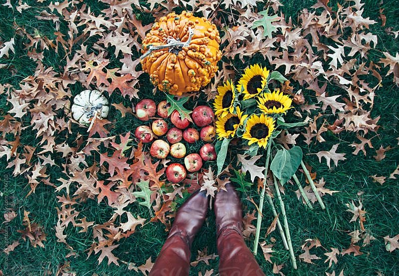 Person in boots standing above a fall scene with pumpkins, apples, sunflowers and leaves  by Carolyn Lagattuta for Stocksy United