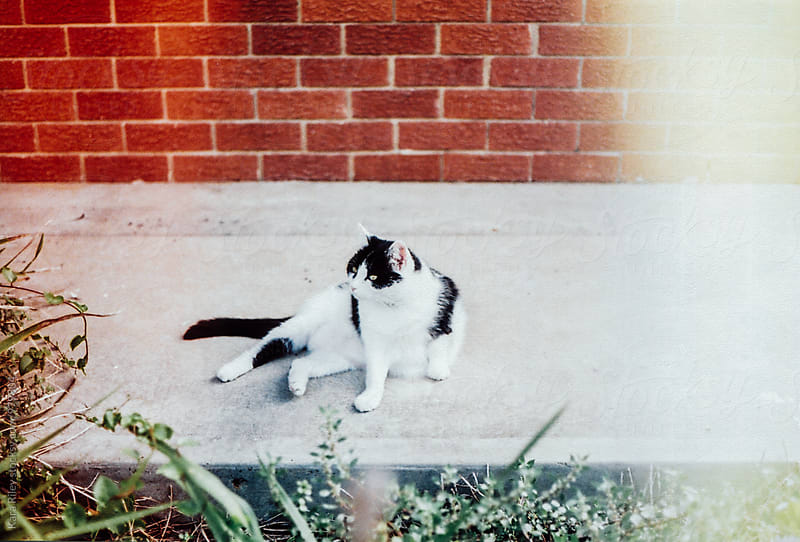 Cat lying on footpath by Kara Riley for Stocksy United