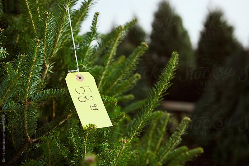 Tree Lot: Focus on Christmas Tree Price by Sean Locke for Stocksy United