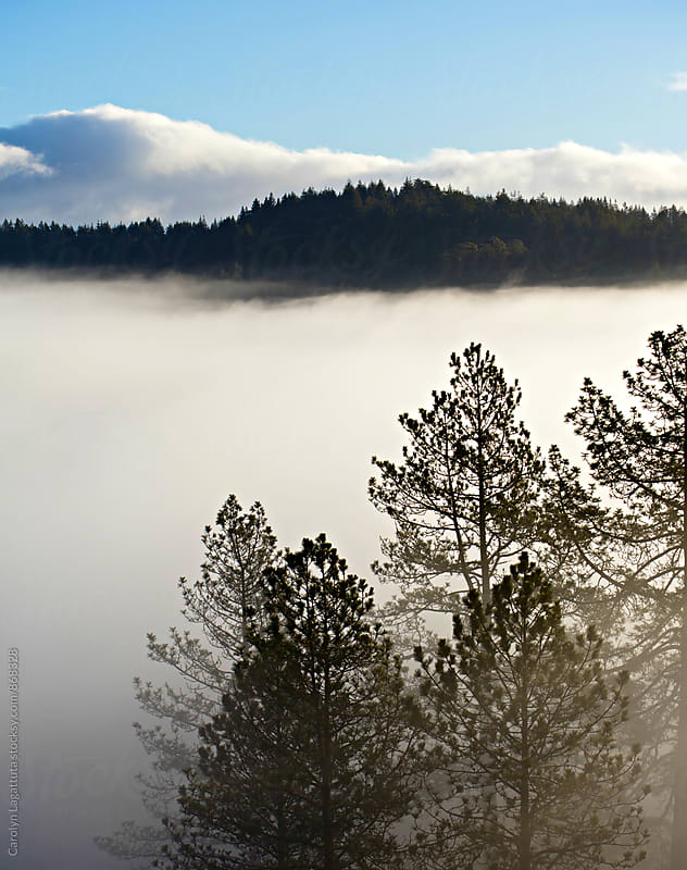 Heavy fog with mountains and trees by Carolyn Lagattuta for Stocksy United
