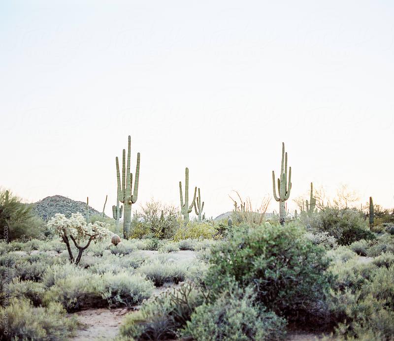 Desert landscape on film by Daniel Kim Photography for Stocksy United
