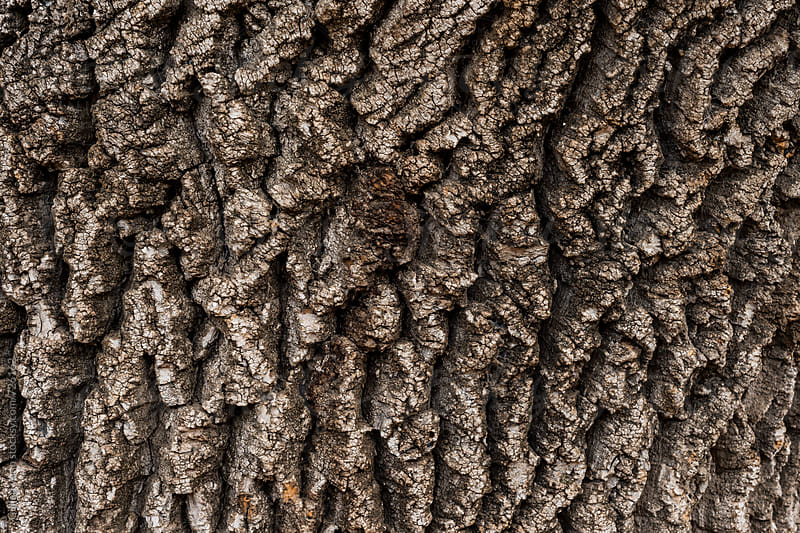 background of a tree bark by Gillian Vann for Stocksy United