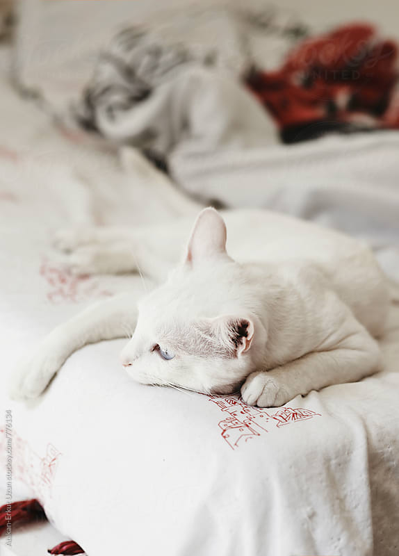 calm white cat by Atakan-Erkut Uzun for Stocksy United