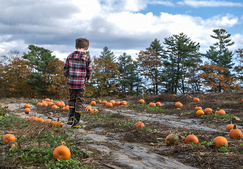 Boy walks alone in a pumpkin patch by Cara Dolan for Stocksy United
