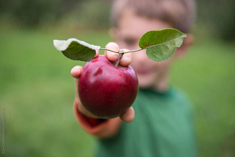 Boy holds out an apple he has just picked at an orchard by Cara Dolan for Stocksy United