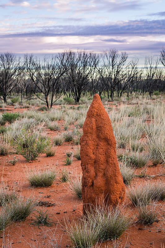 termite mound in outback australia by Gillian Vann for Stocksy United