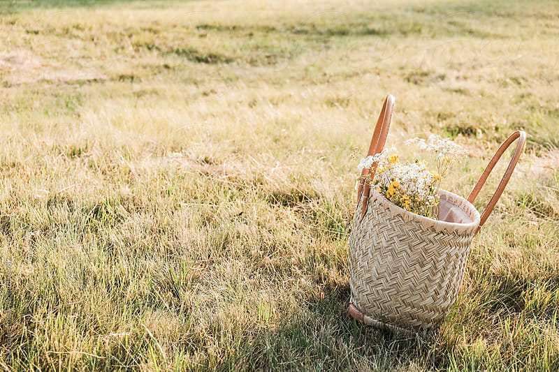 Basket on dry grass by Léa Jones for Stocksy United