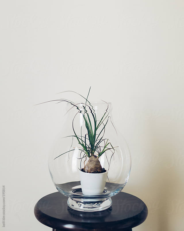 A leafy green plant in a terrarium by Kelli Seeger Kim for Stocksy United