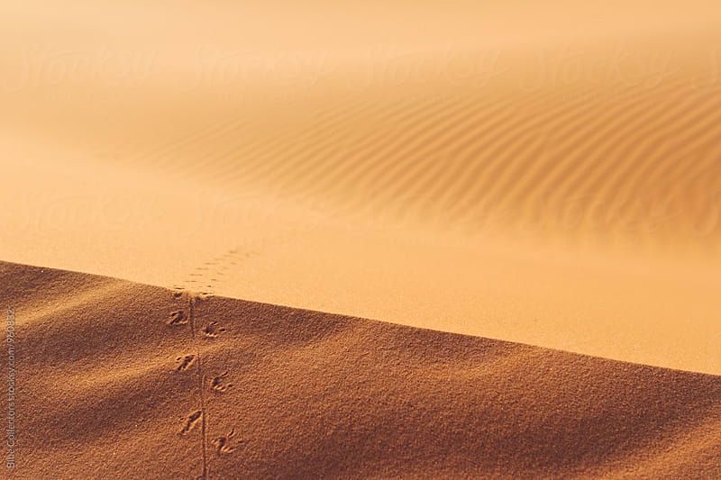 Animal marks into the Desert dunes  by Blue Collectors for Stocksy United