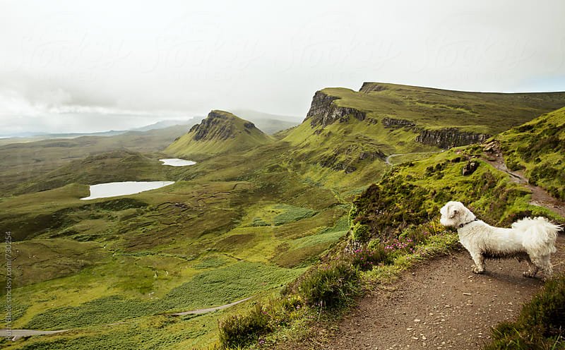 Lhasa apso at the Quiraing, Isle of Skye in Scotland by Ruth Black for Stocksy United