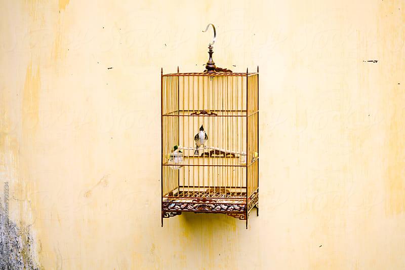 Bird cage by Sam Burton for Stocksy United