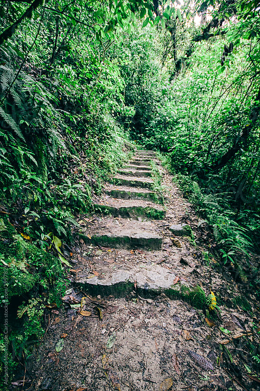 Stairs on the jungle by Alejandro Moreno de Carlos for Stocksy United