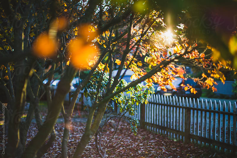Pretty morning light through the trees. by Cherish Bryck for Stocksy United